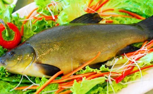 丁桂鱼有哪些营养价值