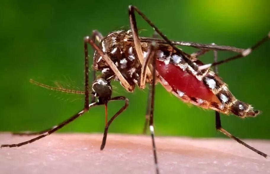 为什么秋天的蚊子爱叮人?