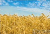 中国农民丰收节 时间定为秋分日