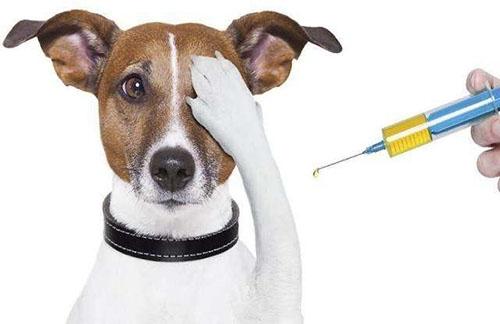 【宝贝】狂犬疫苗打了要注意些什么