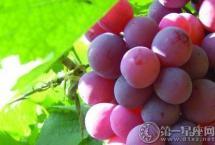经常吃葡萄有什么好处 好到无法想象