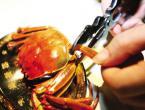 吃螃蟹的工具:用什么工具能轻松吃大闸蟹又不浪费